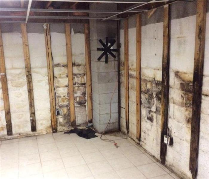 Extensive Mold Damage