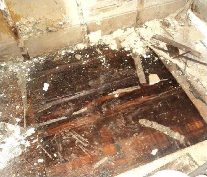 Mold Remediation If You Suspect Mold, Follow These Mold Safety Tips!